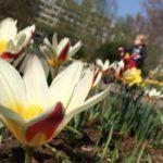 Frühlingsmusik – unterwegs auf der Freundschaftsinsel in Potsdam